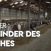 Tudder : découvrez le Tinder des vaches