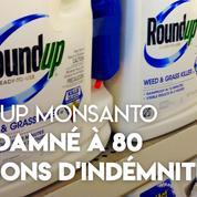 Roundup : Monsanto condamné à 80 millions de dommages et intérêts