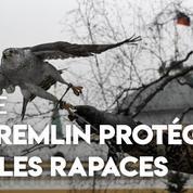 Russie: des rapaces pour protéger le Kremlin