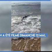 Un requin aperçu sur une plage dans le sud des Landes