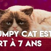 Grumpy Cat, phénomène mondial du web, est mort à l'âge de 7 ans