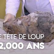 Une gigantesque tête de loup vieille de 32.000 ans retrouvée en Sibérie