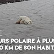 Russie : un ours blanc repéré à plus de 800 km de son habitat traditionnel