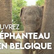 Un éléphanteau est né dans un zoo belge