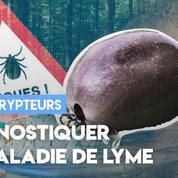 Maladie de Lyme : vers un meilleur diagnostic ?