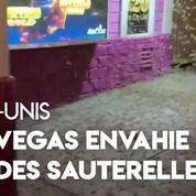 États-Unis : des millions de sauterelles envahissent Las Vegas