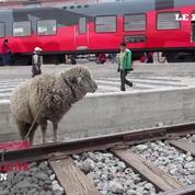 L'Equateur à toute vapeur : à bord du Tren Crucero