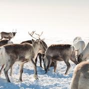Au bout du monde… en Laponie finlandaise