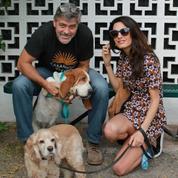 George et Amal Clooney ont adopté un petit Anglais
