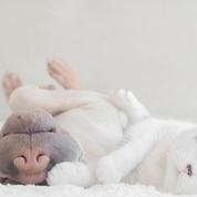51% des Français préfèrent leur chat ou leur chien à leurs amis