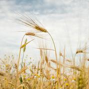 Formules bio, odeurs naturelles : la révolution du parfum