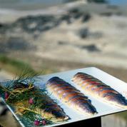 Maquereaux marinés aux épices