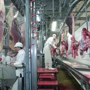 Vache folle : vers la fin des tests dans les abattoirs