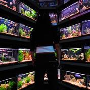 Des bactéries gênantes dans les aquariums