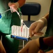 Le don d'ovocytes reste trop rare en France