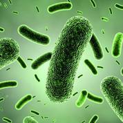 Le top 50 des microbes les plus répandus et dangereux