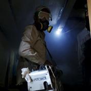 Zika: culpabilité confirmée dans les dommages neurologiques