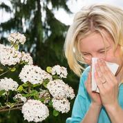 Allergie aux pollens: les heures critiques