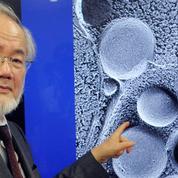 Le prix Nobel de médecine décerné au Japonais Ohsumi