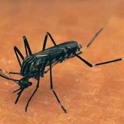 Contre la dengue, un nouvel outil : l'usine à moustiques