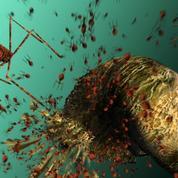 L'inquiétant scénario d'un futur sans antibiotiques