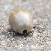 Maladie de Lyme: un plan national annoncé aujourd'hui