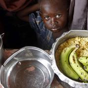Une banane OGM dopée à la vitamine A testée sur l'homme