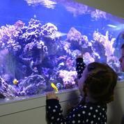 Les incroyables bienfaits des aquariums dans les hôpitaux