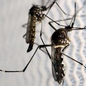 Un anticorps de la dengue efficace contre Zika