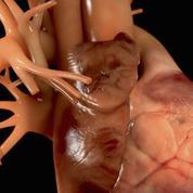 Vers une thérapie régénératrice du muscle cardiaque