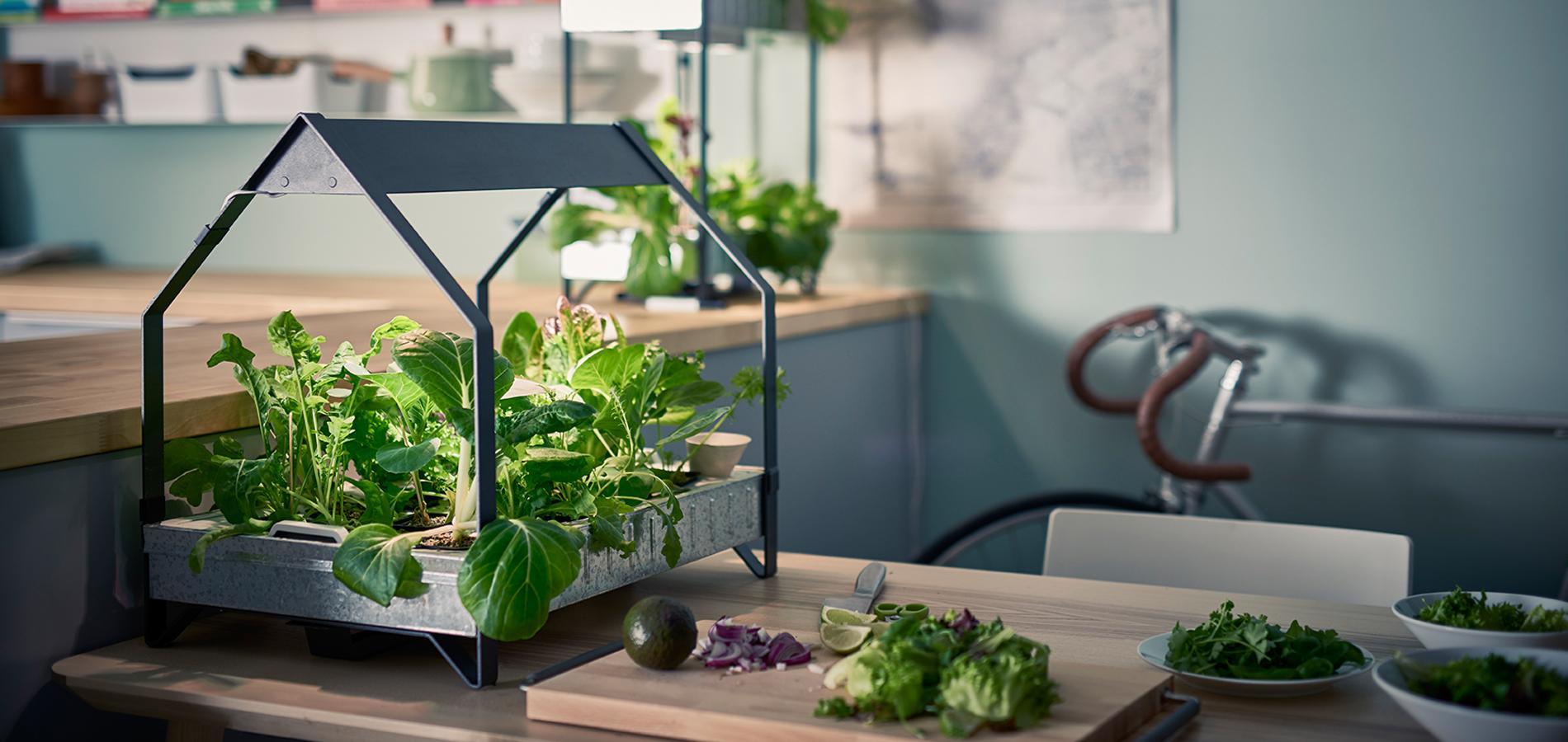 cr er un potager dans sa cuisine le nouveau plaisir en ville cuisine madame figaro. Black Bedroom Furniture Sets. Home Design Ideas