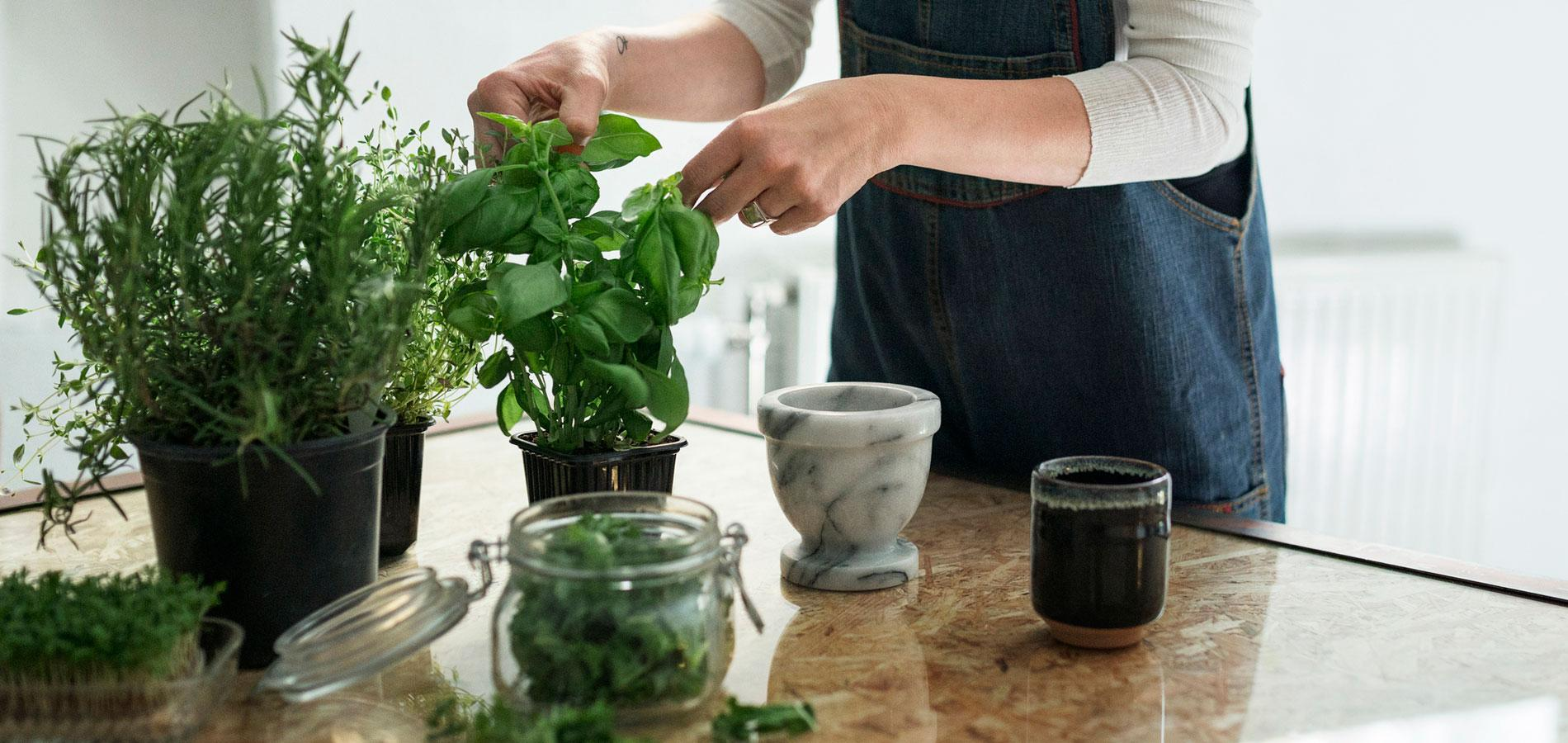 les herbes aromatiques en cuisine. Black Bedroom Furniture Sets. Home Design Ideas