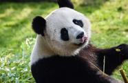 Vive les z'animaux !