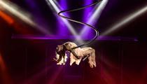 Cirque Phénix, Tony Parker, concept-cars: les sorties du week-end à Paris