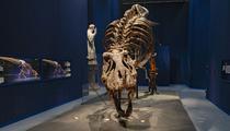 Face-à-face avec un T-rex à Paris