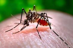 Les moustiques s'habituent vite aux répulsifs
