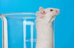 Une thérapie génique restaure l'odorat des souris