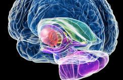 Un antidiabétique stimule la formation des neurones