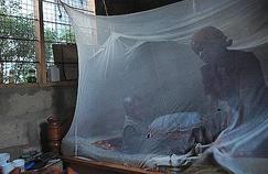 Le paludisme frappe aussi les voyageurs