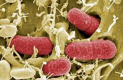 Comment sont combattues les bactéries multirésistantes