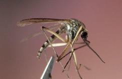 Un produit pour devenir «invisible» aux moustiques