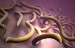 Lyme: les troubles articulaires et neurologiques fréquents