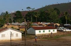 L'épidémie d'Ebola est-elle partie d'un arbre creux?