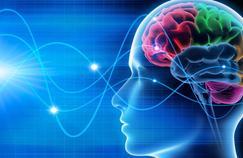Cerveau:de nouveaux types de cellules découverts