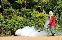 Le défi des insectes qui propagent des maladies