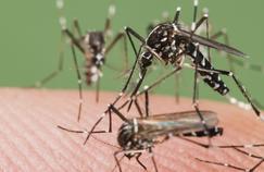 Faut-il avoir peur du moustique tigre?
