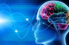 Cerveau : quand les hémisphères s'entraident