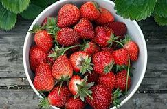 Des fraises contre le cholestérol