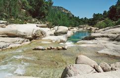 Comment la bilharziose, maladie tropicale, s'est invitée en Corse