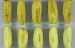 La pomme OGM qui ne brunit pas quand on la coupe